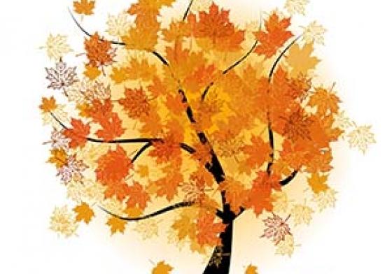 Efterår - træ